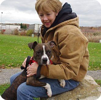 Boxer Mix Dog for adoption in Elyria, Ohio - Coral