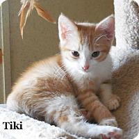Adopt A Pet :: Tiki - Bentonville, AR
