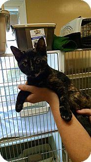 Domestic Shorthair Cat for adoption in Armuchee, Georgia - Willamina