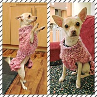 Chihuahua Mix Dog for adoption in San Jose, California - Kylie