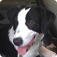 Adopt A Pet :: Wonder - Thomasville, NC