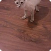 Adopt A Pet :: Whisper - Wasilla, AK