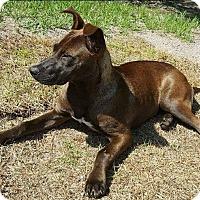 Adopt A Pet :: Sarah - Jacksonville, NC