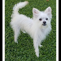 Adopt A Pet :: POLO - Winchester, CA