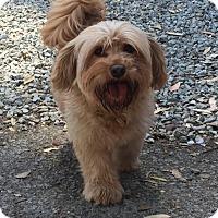 Adopt A Pet :: Ciabatta - Mission Viejo, CA