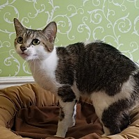 Adopt A Pet :: Tabitha - Red Wing, MN