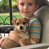 Adopt A Pet :: Henry - Plainfield, IL
