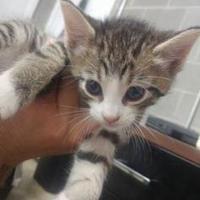 Adopt A Pet :: Faith - Amory, MS