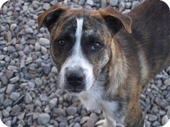 Mixed Breed (Medium) Mix Dog for adoption in Delta, Colorado - Tuttle