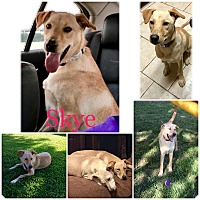 Adopt A Pet :: SKYE - Rootstown, OH