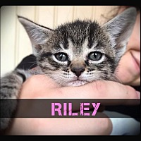 Adopt A Pet :: Riley - Hartford City, IN
