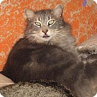 Adopt A Pet :: Zane Gray - Sherman Oaks, CA