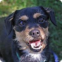 Adopt A Pet :: Malcolm - Mission Viejo, CA
