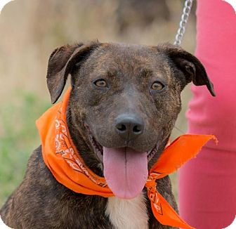 Patterdale Terrier (Fell Terrier)/Retriever (Unknown Type) Mix Dog for adoption in Poway, California - MAGGIE