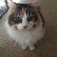 Adopt A Pet :: Lulu - Bloomington, MN