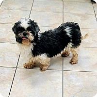 Adopt A Pet :: Kenai - Newark, DE