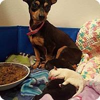 Adopt A Pet :: Blanche - Allen, TX