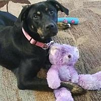 Adopt A Pet :: Zoey - Great Bend, KS