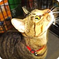 Adopt A Pet :: Kuhuna - Escondido, CA