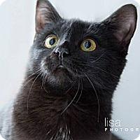 Adopt A Pet :: Annie - Montreal, QC