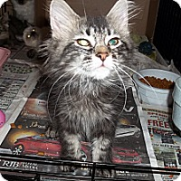 Adopt A Pet :: Zed - Acme, PA