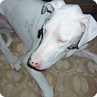 Adopt A Pet :: Doogie - Phoenix, AZ