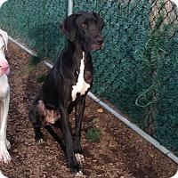 Adopt A Pet :: Diamond - York, PA