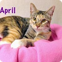 Adopt A Pet :: April - Foothill Ranch, CA