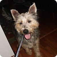 Adopt A Pet :: Benji - Lawrenceville, GA