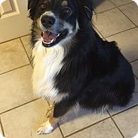 Adopt A Pet :: Tyson - Greeley, CO