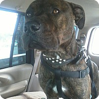 Adopt A Pet :: Tyco (COURTESY POST) - Baltimore, MD