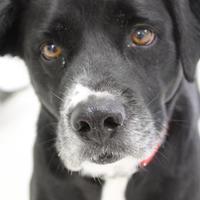 Adopt A Pet :: Hobo - Grand Island, NE