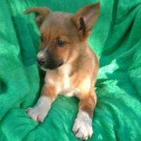Adopt A Pet :: Lewis($400) Available 8/26 - Redding, CA