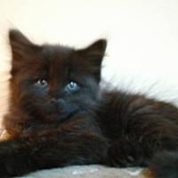 Adopt A Pet :: Yogi Bear - Garden City, MI