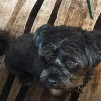 Adopt A Pet :: Monkey - Athabasca, AB