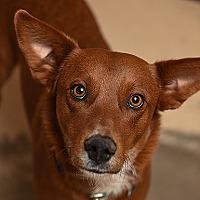 Adopt A Pet :: Red - Kanab, UT