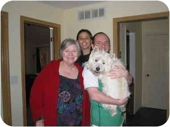 Westie, West Highland White Terrier Dog for adoption in Frisco, Texas - Sprocket Adopted