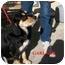 Photo 2 - Cocker Spaniel/Hound (Unknown Type) Mix Dog for adoption in Slidell, Louisiana - Garland