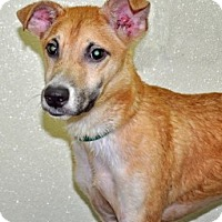 Adopt A Pet :: Davinci - Port Washington, NY
