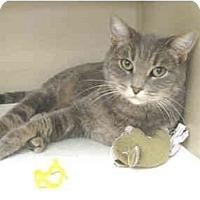 Adopt A Pet :: Mokeena - Mesa, AZ