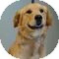 Adopt A Pet :: Hoss - Denver, CO