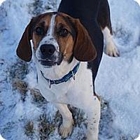Adopt A Pet :: Charger - Toronto/Etobicoke/GTA, ON