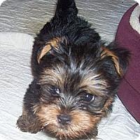 Adopt A Pet :: Caleb - CAPE CORAL, FL