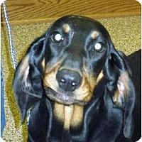 Adopt A Pet :: Beanie Baby - Dallas, TX