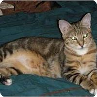Adopt A Pet :: Cayenne - Fort Lauderdale, FL