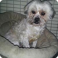 Adopt A Pet :: Annie - Denver, IN