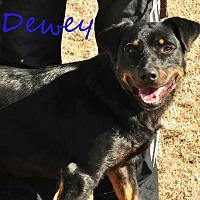 Adopt A Pet :: Dewey OKs31 - Davis, OK