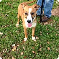 Adopt A Pet :: Skipper - Marble Falls, TX