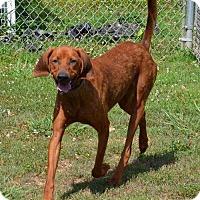 Adopt A Pet :: Dewey - Hagerstown, MD