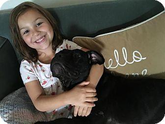 Pit Bull Terrier Mix Dog for adoption in Cranston, Rhode Island - Ariel